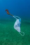 Thế giới dưới nước trong loạt ảnh đại dương đẹp nhất năm