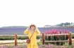 'Lịm tim' trước cánh đồng hoa lavender tím biếc ở Đà Lạt