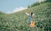Đồi dứa Bắc Giang vào mùa chín vàng, đẹp thơ mộng
