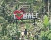 Nóng: Du khách Việt Nam đã có thể xuất cảnh mà không cần qua hải quan ở Bali, Indonesia