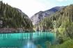 Kazakhstan: Bí mật rừng cây có rễ mọc chổng lên trời, thân cắm xuống lòng hồ
