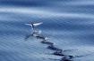 Độc lạ loài cá chuồn biết bay ở biển Đà Nẵng – Quảng Nam