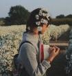 Tháng 11 có hẹn với mùa hoa cúc họa mi Hà Nội