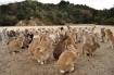 Đi ngay hòn đảo thỏ Okunoshima Nhật Bản xinh yêu hết nấc