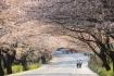 Hàn Quốc mở Trung tâm xin visa tại TP.HCM