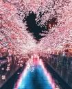 Tìm đâu ra nước nào được như Nhật Bản: Cả 4 mùa đều có nét đặc trưng riêng, đi vào lúc nào cũng thấy đẹp!