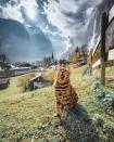 Gặp cô mèo Suki Cat 'đi đâu cũng ngủ' với gần 2 triệu fan