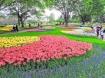 Tháng 5 đến Nhật Bản ngắm hoa nở muôn nơi