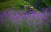 Mùa hoa Sa Pa đã tới rồi, bạn có nhớ cái hẹn lúc thu về?