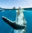 'Nghẹt thở' ảnh đẹp thiên nhiên từ cuộc thi National Geographic Travel